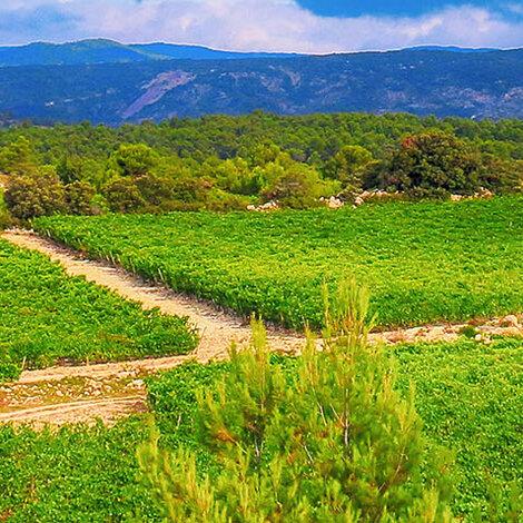 Gerard Bertrand, Frankrig, økologi og biodynamik, vinhuse, vinproduktion